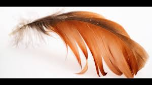 feathers appear when are near what is the meaning of finding