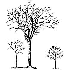 Oak Tree Drawing Oak Tree Clipart