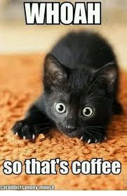Mouse Memes - whoah so thats coffee cataddictsanony mouse meme on me me
