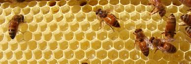 my honeybees backyard beekeeping