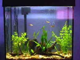 Live Plants In Community Aquariums by Faqs On Plants For Aquariums