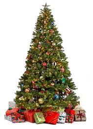 What Trees Are Christmas Trees - christmas tree pictures images and stock photos istock