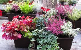 winterharte pflanzen balkon balkonpflanzen set für balkonkasten 60 cm lang pflanzen versand