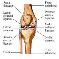 Lateral Collateral Ligament Ankle Medial And Lateral Collateral Ligament Injury
