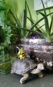 Turtle Planter Urban Gardening Designing Creative Space Garrott Designs