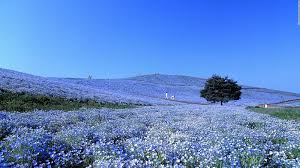 Beautiful Pictures Of Spring by Photos Japan U0027s 34 Most Beautiful Places Cnn Travel