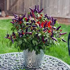 2018 seeds 100 genuine fresh rare purple carolina reaper pepper