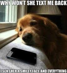 Puppy Face Meme - sad bulldog puppy meme