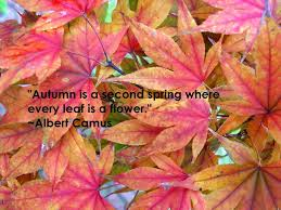 25 quotes autumn ideas fall weather
