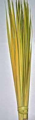 palms for palm sunday purchase bogho roll yellow diy feathercircles ethnic decor