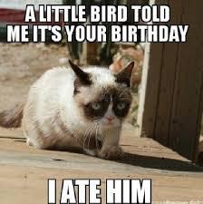 image result for cat memes adix pinterest grumpy cat memes