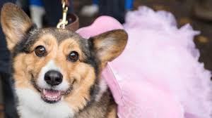 Halloween Dog Costume Pet Costumes Martha Stewart