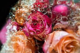 free images plant petal rose orange red color pink
