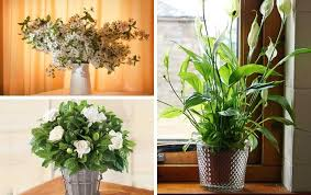 Indoor Fragrant Plants - these plants will make your home smell good femina in
