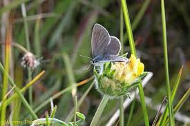 small blue butterfly photo wp33176