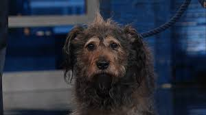 Depressed Pug Meme - sad dog gifs get the best gif on giphy