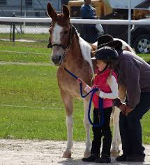 horse clubs and associations for kids