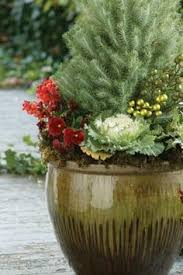 Winter Container Garden Ideas A Simple Winter Container Is A Small Boxwood Or Evergreen
