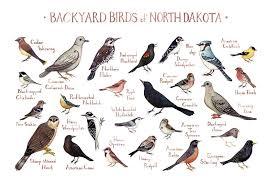 North Dakota birds images North dakota backyard birds field guide art print kate dolamore art jpg