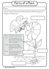 lable a flower worksheet flowers are flowering longitudinal