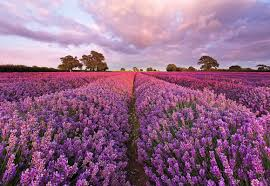 brewster home fashions komar lavender 72 x 50 default name