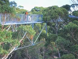tree top walk explore parks wa parks and wildlife service