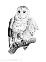 The Barn Owl Carol Stream 2017 Gnsi Members Exhibit Gnsi