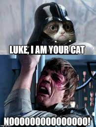 Star Wars Meme - 20 of the best cat wars memes to get you ready for star wars i