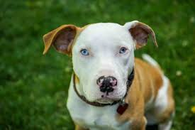 state with most dog owners 2016 dog bites category archives u2014 san diego injury law blog published