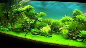 Most Beautiful Aquascapes Most Beautiful Aquascapes Underwater Landscapes Music Jinni