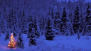 Christmas Tree High Resolution Christmas Tree Wallpapers Hd Wallpaper Of Christmas