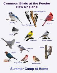 bird watching challenge and bird book bird identification bird
