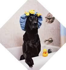 Make Bathtime Fun For Your Dog Bathing And Grooming Your Labrador The Labrador Site