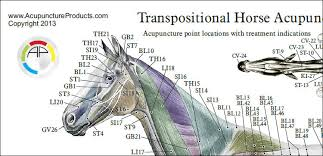 Dog Anatomy Poster Horse Equine Acupuncture Points Chart