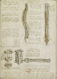 Leonardo Da Vinci Human Anatomy Drawings Hundreds Of Years Ahead Of His Time Leonardo Da Vinci U0027s