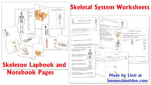 skeletal system worksheet packet u0026 6 hands on activities about