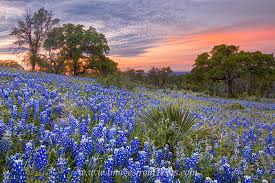 Texas landscapes images Colors of a bluebonnet sunset 1 texas hill country images from jpg