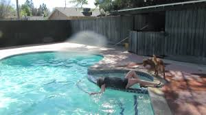 wetlook angels in dress in pool with playful dog youtube