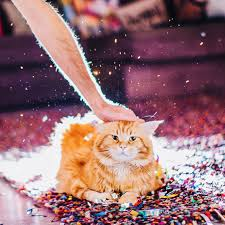 kristina makeeva cutlet the cat poses for his personal human photographer