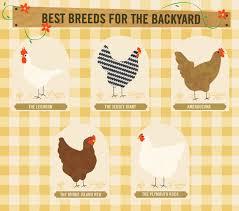 Can I Raise Chickens In My Backyard The Art Of Happy Hens U2014 Urban Chicken Coop Chicken Coop