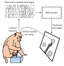 augmentation of sensorimotor functions with neural prostheses