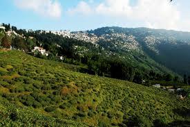 Rock Garden Darjeeling by Happy Valley Tea Gardens Darjeeling Reviews Happy Valley Tea