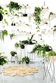 decorative indoor plants inside house plants houseplants display ideas 5 indoor plants low