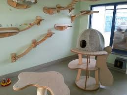 cat wall furniture cats wall furniture gold paw feel desain