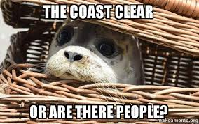 Clear Meme - the coast clear or are there people anti social seal make a meme