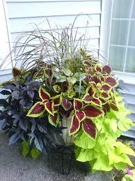 Vegetable Pot Gardening For Beginners Pot Gardening Vegetables For Beginners In India U2013 Angeloferrer Com