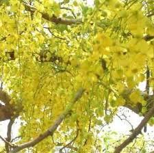 Gold Flowers Tropical Flowers The Flower Expert Flowers Encyclopedia