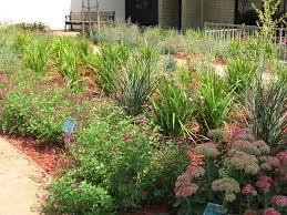 Drought Tolerant Landscaping Ideas Exterior Ideas Green Drought Tolerant Landscaping Choose The Right