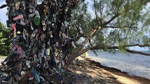 grand cayman s flip flop tree