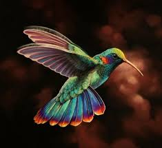 gorgeous colors on this hummingbird birds